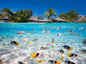 Tahiti-Bagno-in-laguna