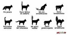 il-gatto-linguaggio-della-coda
