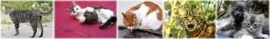 gatto-comune-detto-micio