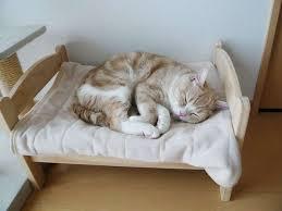 il-riposo-del-gatto