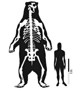 comparazione fra Arctotheriun e uomo