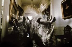 Nella foto, in alto: i rinoceronti di Jumanji