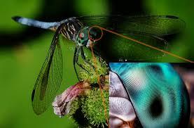 occhi di insetto volante