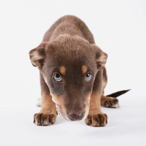 cane pentito o timoroso