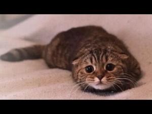 gatto che teme rimprovero