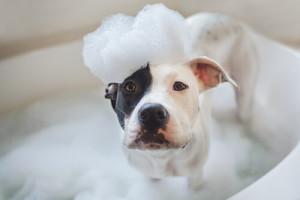 bagno cane giusto livello dell'acqua