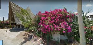 Nella foto, in alto: lussureggianti bouganville ovunque, un'esplosione di fiori colorati