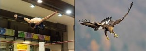 Nella foto, in alto: AB Knight ha preso il volo in modo maestoso