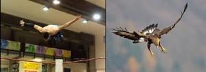 Nella foto, in alto: volare dalla terza corda con la classe di un'aquila