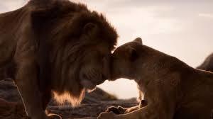 leone 4
