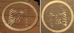 il volto del Cristo appare in due differenti cerchi nel grano, profetizzando la seconda venuta di Cristo